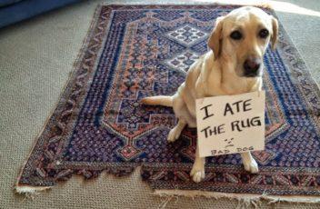 dog eat
