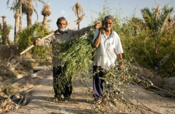 15337362-farmers-in-oasis-near-yazd-rural-iran